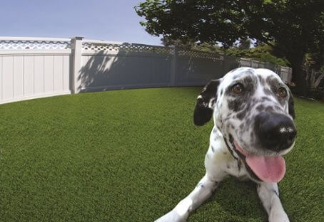 artificial turf pet facilities